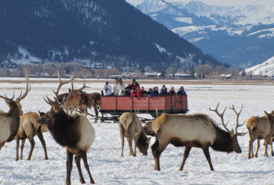Elk Refuge Sleigh Ride 4