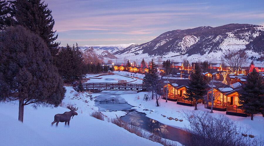 RIJH WinterPropertyImage+Moose