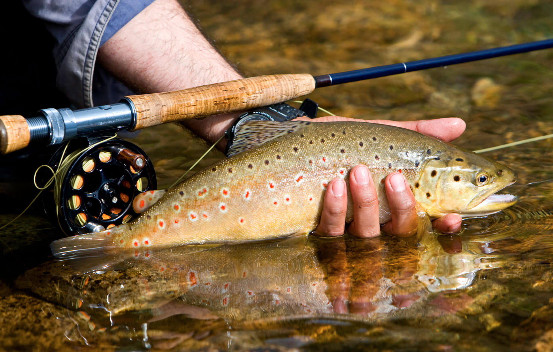man's hand holding trout in river with fly fishing pole